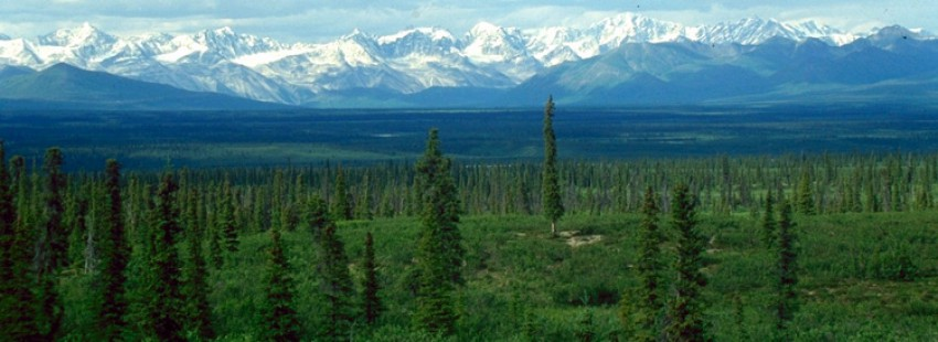 vast boreal forests could 'hit a tipping point' this century ...