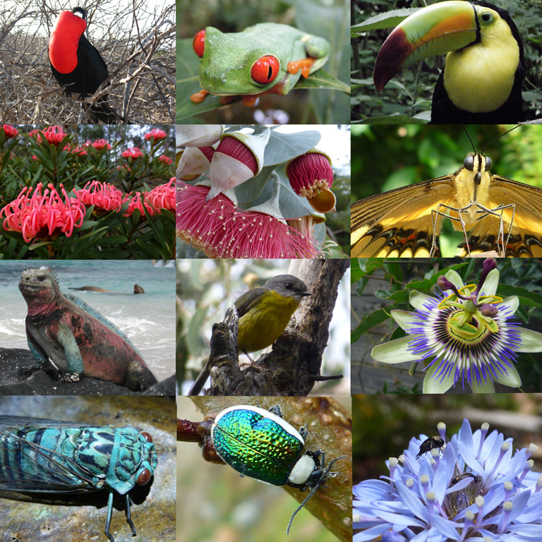 A collage of wildlife and flowers from diverse latitudes. Photos by Rhiannon Dalrymple.