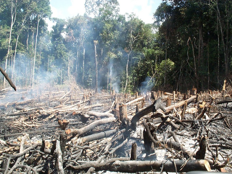 Traditional slash and burn agriculture in the Amazon. Photo credit: Hans ter Steege.