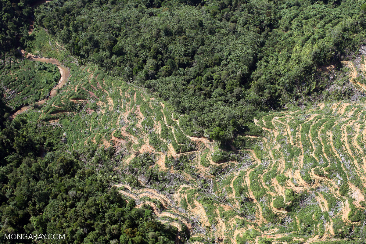 An oil palm plantation in Malaysia's Sabah state. Photo by Rhett A. Butler
