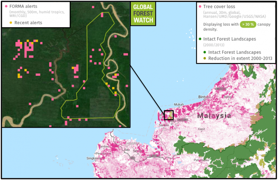 FORMA alerts indicate areas that have likely been affected by deforestation. Global Forest Watch data show tree cover loss in the BLD concession, with 15 FORMA alerts occurring between January and September of this year. Sarawak as a whole has been beset by plantation activity and forest loss, with few intact forest landscapes - large areas of primary forest - left in the state.