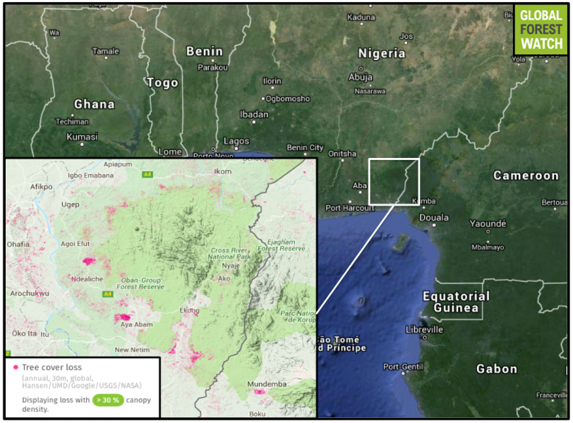 Global Forest Watch shows deforestation creeping to the edges of Cross River National Park in southeastern Nigeria, with around 25,000 hectares of tree cover loss occurring around the park from 2001 through 2014. However, the park itself has so far remained relatively unscathed, losing 1,500 hectares of tree cover in that time. In 2015, construction of a road began that will skirt the fringes and cross through the buffer zone of the national park, from Calabar north to Ikom and on to Katsina Ala (not pictured). Opponents of the project worry that the road may cause a spike in illegal logging and poaching.