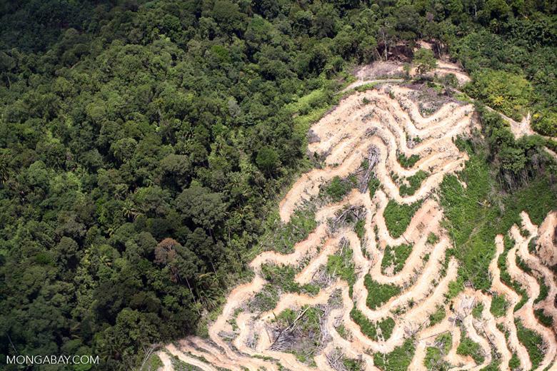 Deforestation in Borneo. Photo by Rhett Butler.