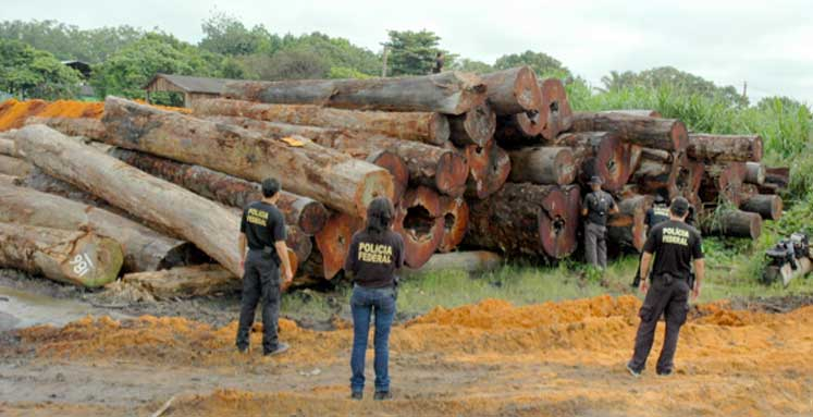 Brazilian Federal Police make a raid on an illegal logging operation. Photo courtesy of the Brazilian Federal Police