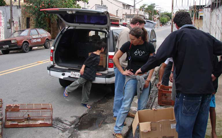 Brazilian authorizes conducting a wildlife trafficking raid and seizure. Brazil Photo by Juliana Machado Ferreira