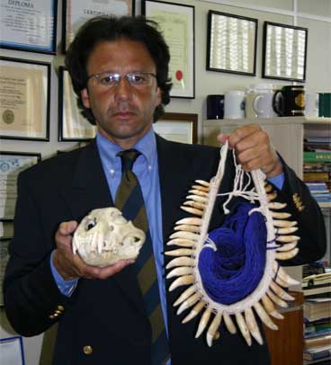 Operation Pindorama by the Brazilian Federal Police resulted in the seizure of over 1,000 trafficked items, including this necklace made from 44 jaguar teeth and a jaguar skull. Photo courtesy of the Brazilian Federal Police