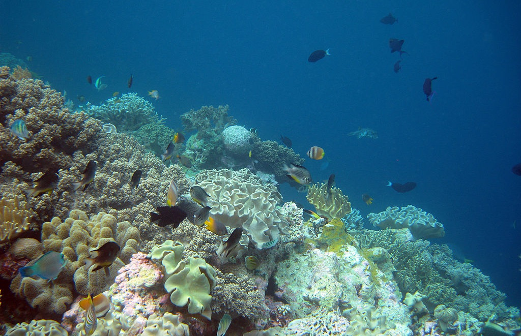 A coral reef in Wakatobi. Photo courtesy of Craig D/Wikimedia Commons