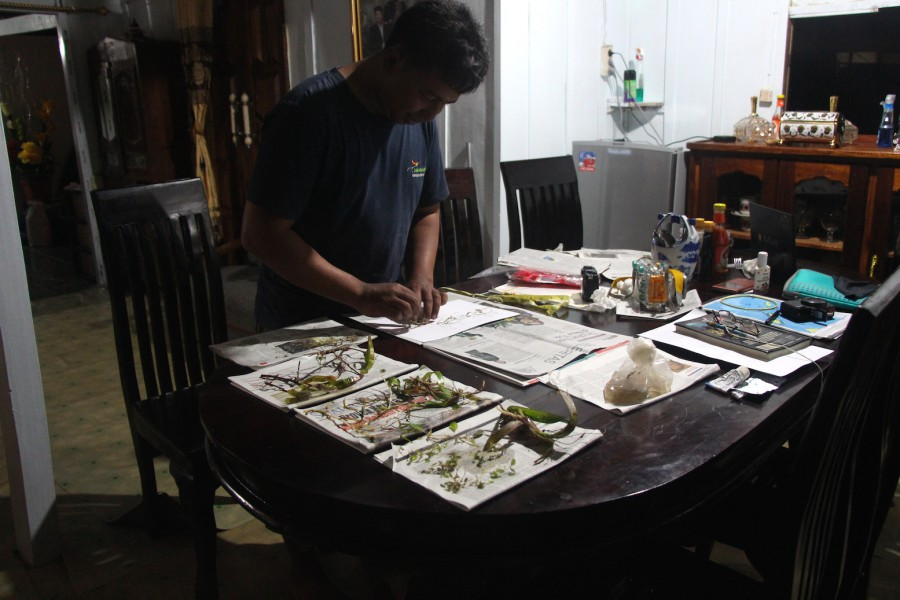Indonesian Institute of Science researcher Andri Irawan arranging seagrass herbarium samples at a resident's house on Kaledupa Island, Wakatobi National Park. Photo by Melati Kaye