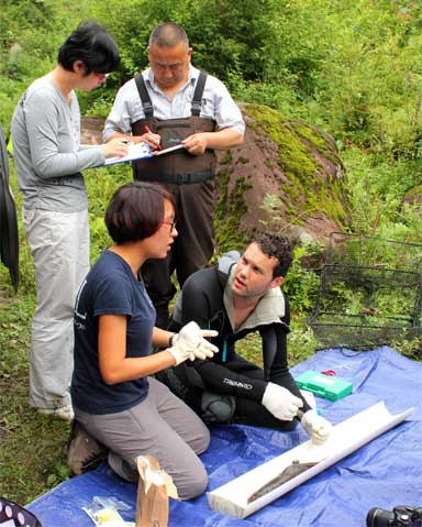The largest survey in China's conservation history is being undertaken by the Chinese Giant Salamander Project. Here, Ben Tapley and other team members work with a Chinese Giant Salamander in the field. Photo by Ben Tapley courtesy of ZSL