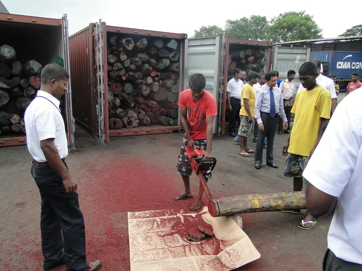Rosewood seizure in Sri Lanka in 2014. Image courtesy of Sri Lanka Customs.