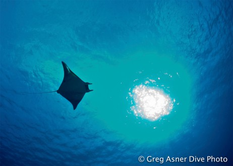 Manta Ray off Sipadan Island in the Coral Triangle. Photo by Greg Asner of DivePhoto.org