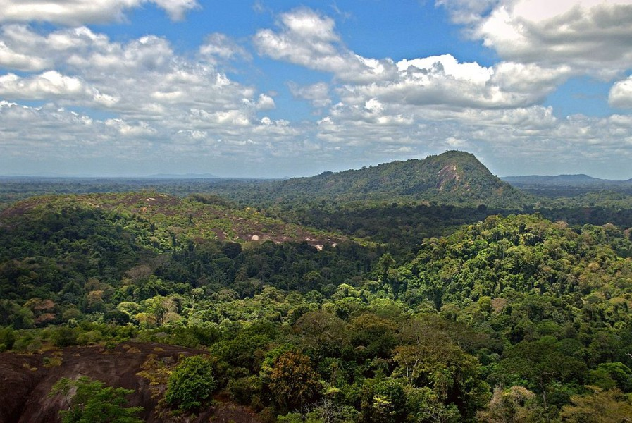 1024px-Amazon_jungle_from_above