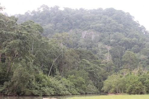 Meru Betiri National Park in East Java. Photo by Petrus Riski