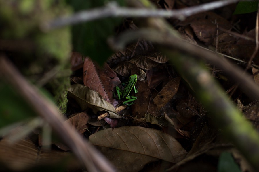 The new national park is home to many amphibians. Photo by Diego Perez.