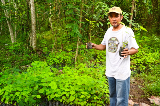 Nawir Abidin, head of the Bulu Dewata cooperative in Massewae village, displays white teak seedlings. Photo by Wahyu Chandra