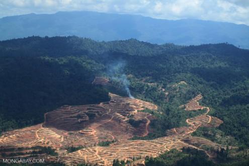 Oil palm in Sabah