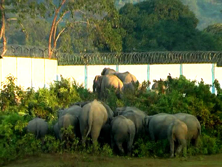 The 2-kilometer long boundary wall is a physical barrier to elephants' movements. Photo credit: Smarajit Sharma.