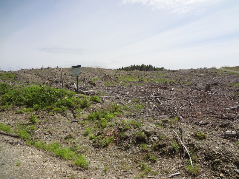 Plum Creek clearcut with SFI sign small v1