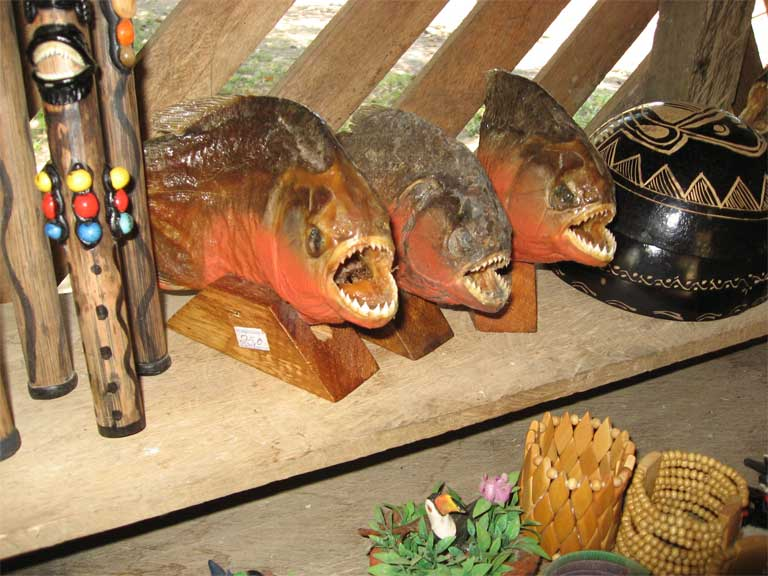 Piranhas in a shop in Brazil. Photo by Laurel Neme