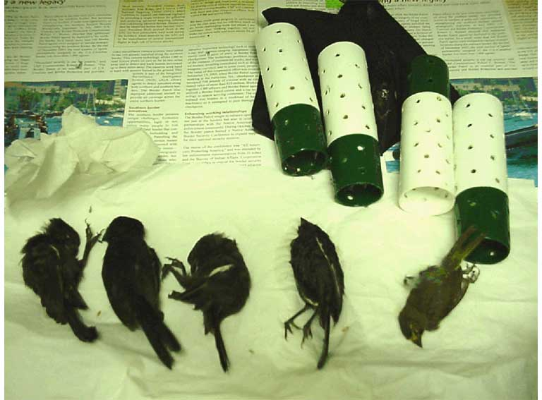 Smuggled tropical birds hidden in a tube. Photo by Tom MacKenzie courtesy of USFWS