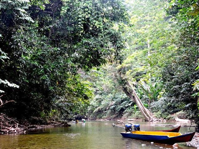 A river runs through the forest in Punan Adiu village. Photo by Christopel Paino