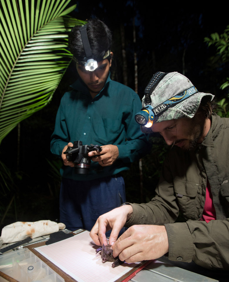 Researchers handling a bat to photographing the wing to measure aspect ratio and relative wing loading (two components of the wing morphology trait). Photo by Madalena Boto.