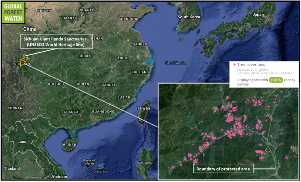 The deforestation in Sichuan Giant Panda Sanctuaries is detectable by satellites. Data from Global Forest Watch shows the area shown lost around 440 hectares (1,087 acres) of tree cover from 2001 through 2014. In all, the world heritage site lost nearly 5,000 hectares (12,355 acres) of tree cover during that period.