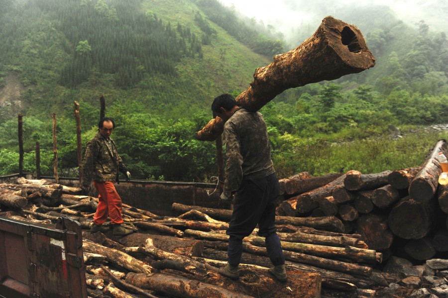 Logging operations in natural forest in Fentongzhai Nature Reserve, in UNESCO Sichuan Giant Panda Sanctuaries. Photo courtesy of Greenpeace.