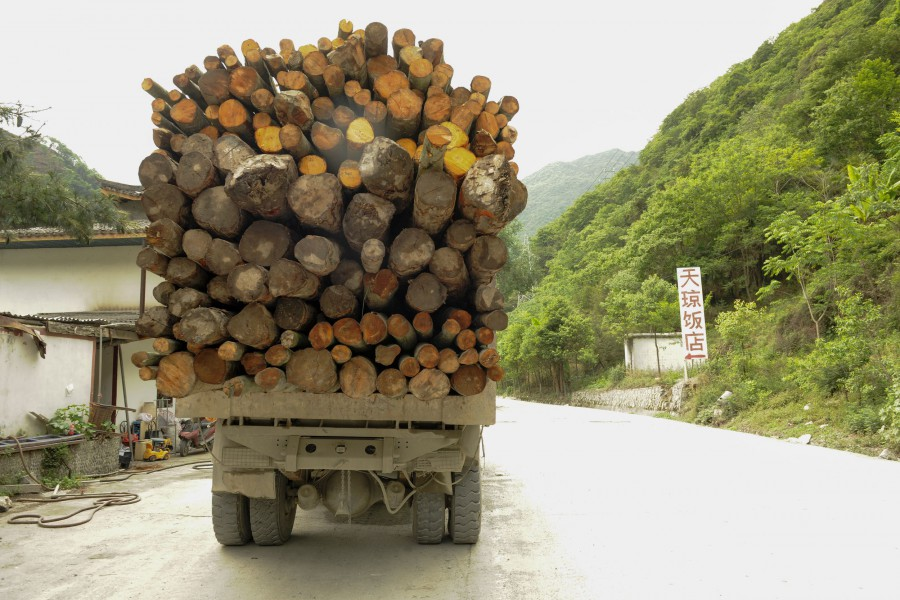 A truck loaded with timber.  A Greenpeace team conducts field research into deforested areas surrounding the Fengtongzhai National Nature Reserve in Yaían, in the Sichuan Giant Panda Sanctuaries - a UNESCO World Heritage Site.  Illegal logging in this area is a direct threat to endangered plant and animal species, including the Giant Panda. Photo courtesy of Shi bai Xiao/Greenpeace.