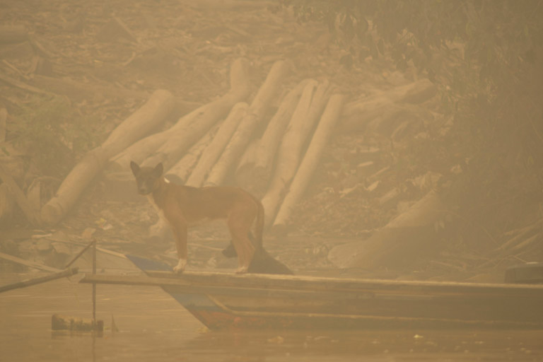 Dogs are seen at the bank of Kapuas river where the air is covered with haze from the forest fires in Kapuas district, Central Kalimantan province, Borneo island, Indonesia.