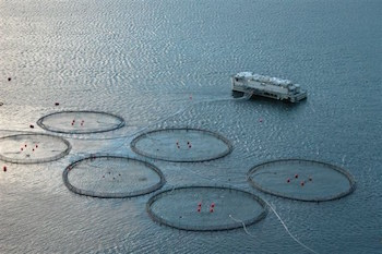 Aquaculture for rearing salmon in the Faroe Islands. Photo courtesy of Erik Christensen.