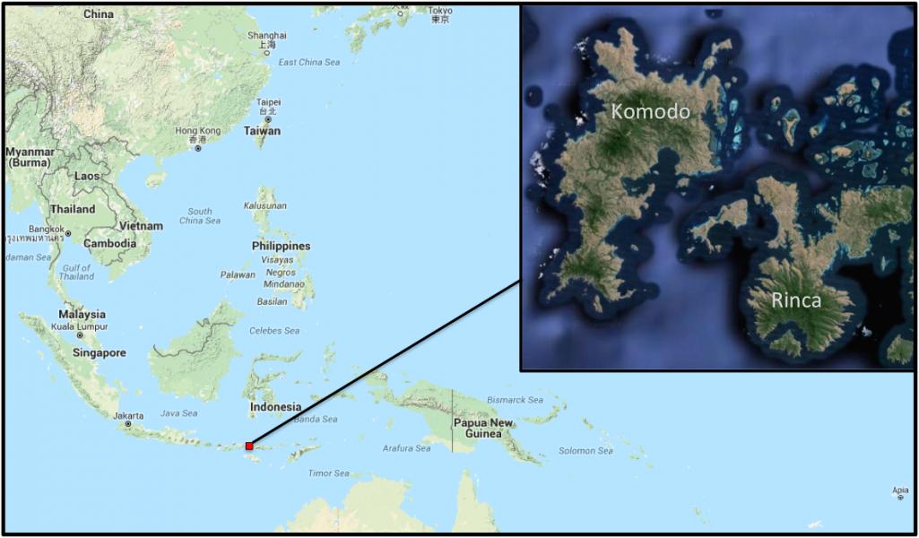 Most Komodo dragons live on the islands of Komodo and Rinca.