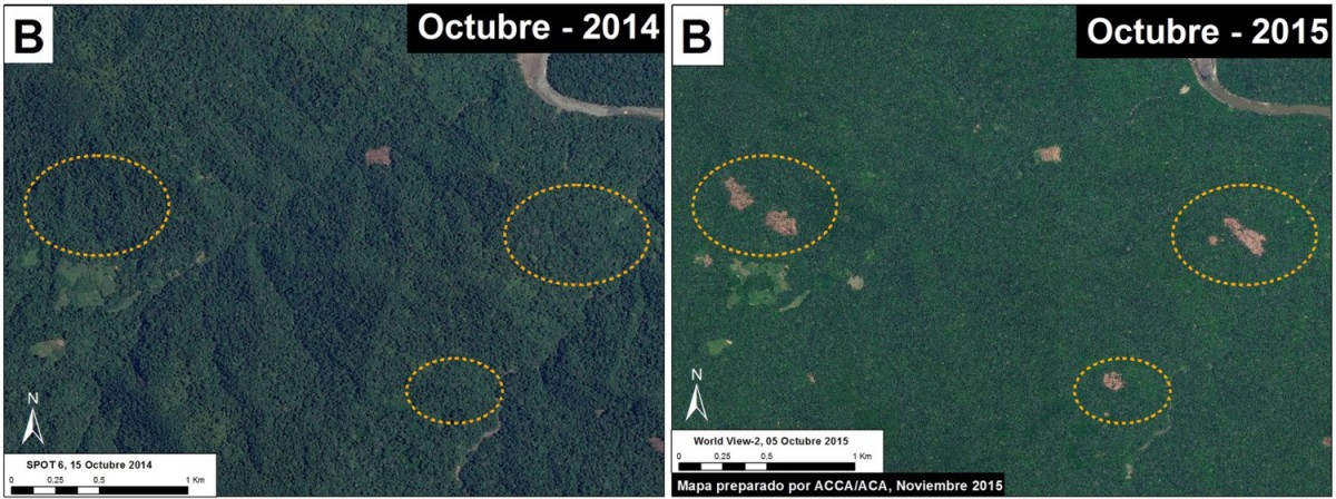 The MAAP team also spotted areas of deforestation that occurred between October 2014 and October 2015 near the park's southern border. Image courtesy of MAAP.