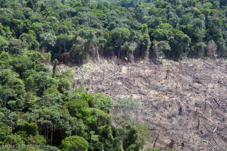 Anthropogenic activities like logging and mining, combined with longer dry seasons, could exacerbate transition of the Amazon rainforests to drier savannah-like states. Photo by Rhett Butler.