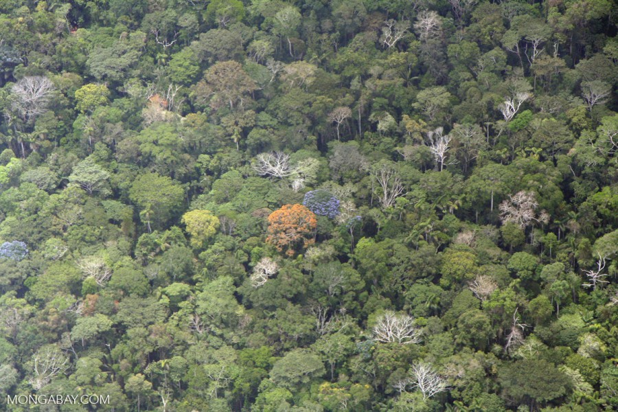 The massive Amazon forest is home to around 16,000 species of trees. Photo by Rhett Butler.