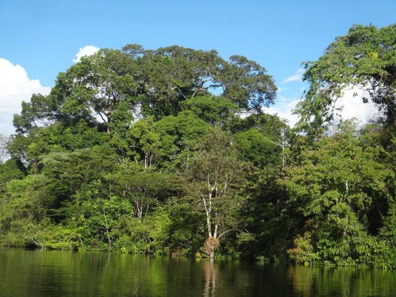 The Loretoyacu River. Photo by Elvira Durán.