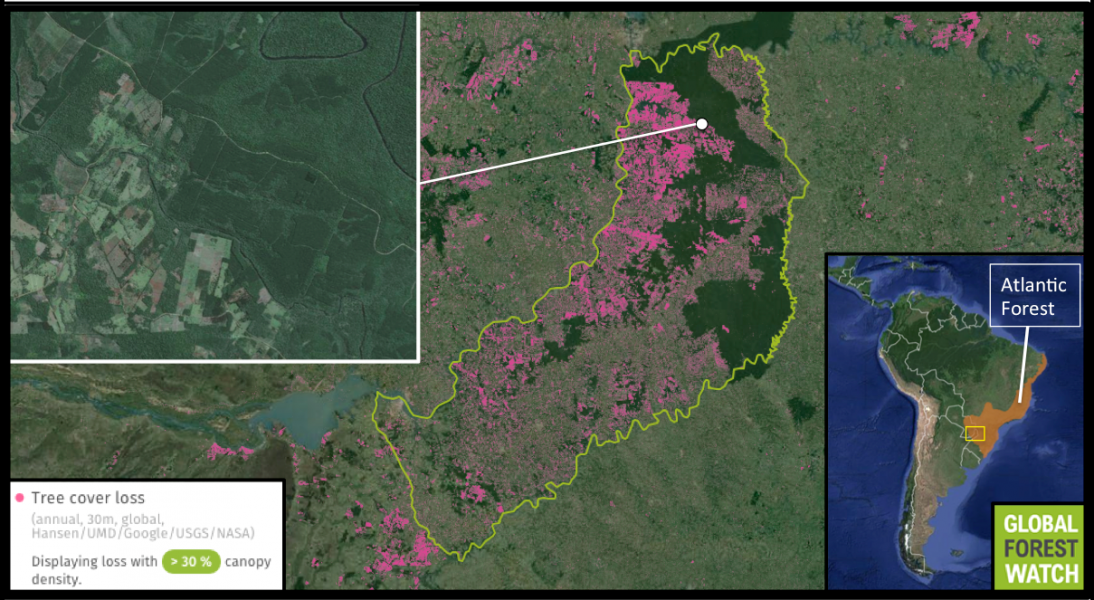Misiones Province (outlined in green) contains the only Atlantic Forest in Argentina. However, data from Global Forest Watch show human activities are dramatically affecting it, with the province losing nearly 14 percent of its tree cover from 2001 through 2014. Satellite imagery shows clearings and tree plantations abutting forest.