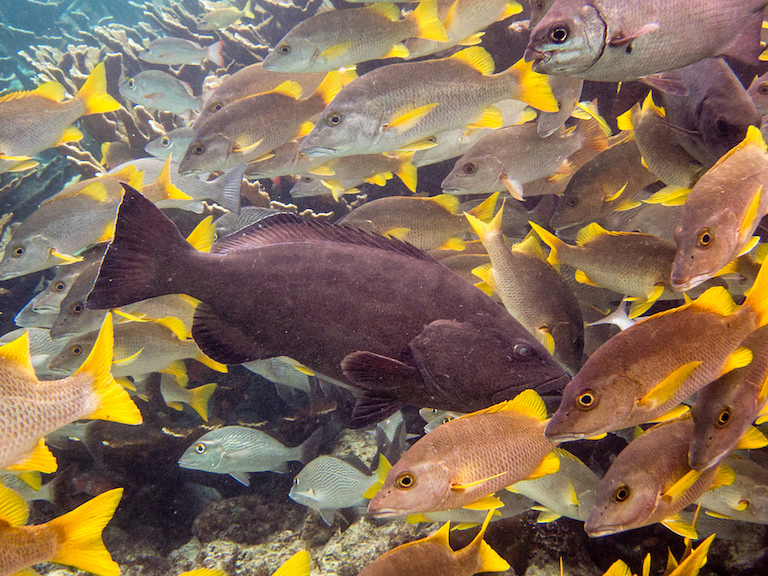 Reef fish in Belize. Photo by David.