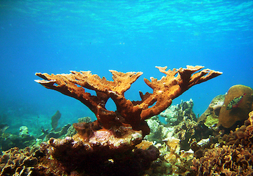 Coral at Lighthouse Reef, Belize. Photo by diver_meg.