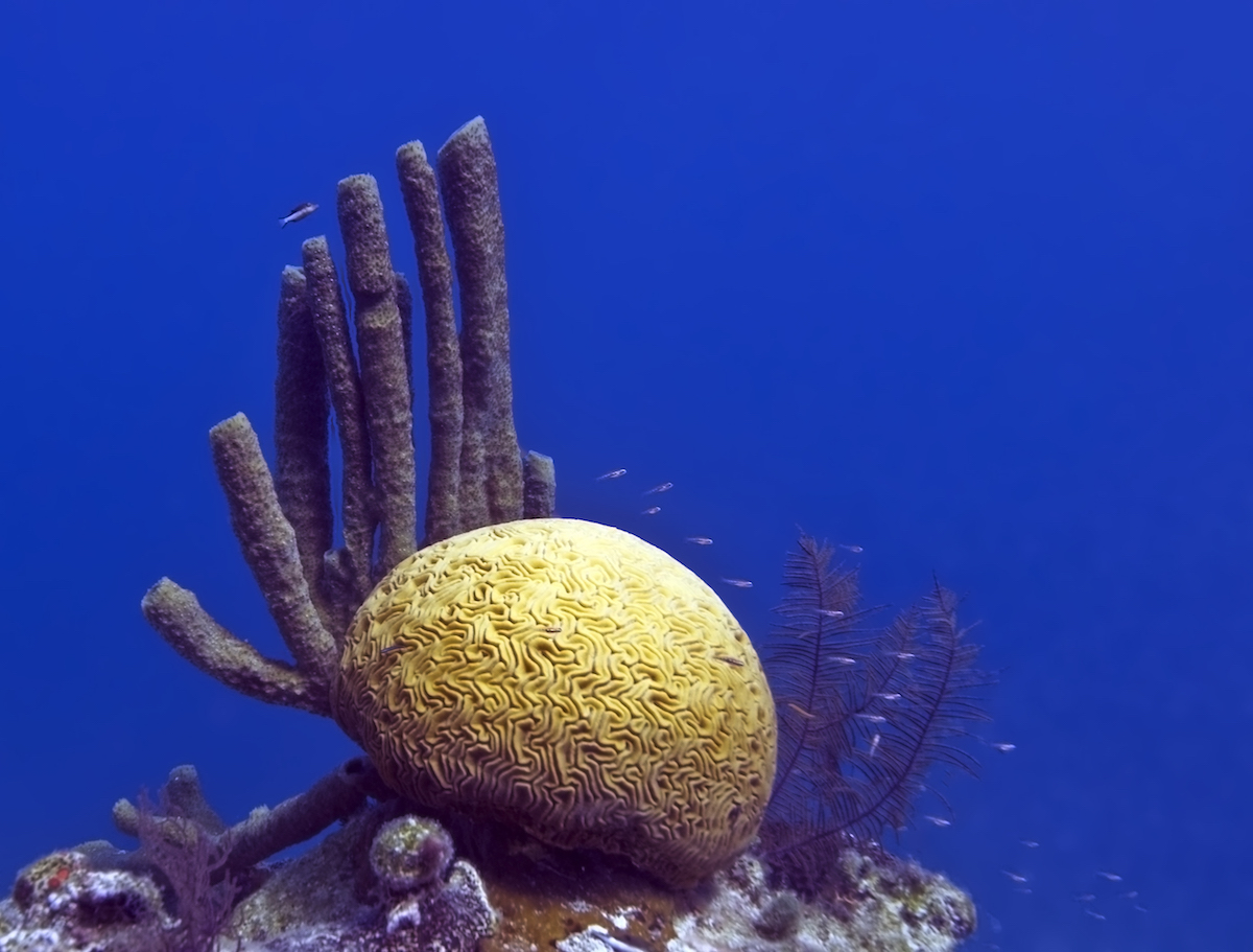 Coral and other residents of Belize's Great Blue Hole. Photo by jayhem.
