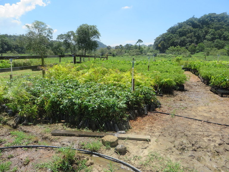 A nursery in Guandu, Brazil, where native trees are grown to restore riparian forest in areas critical for Rio de Janeiro's water supply. Landowners participating in the Guandu Water Producer Project receive payments for the area they enroll for protection or restoration. Photo by the Natural Capital Project/Leah Bremer.
