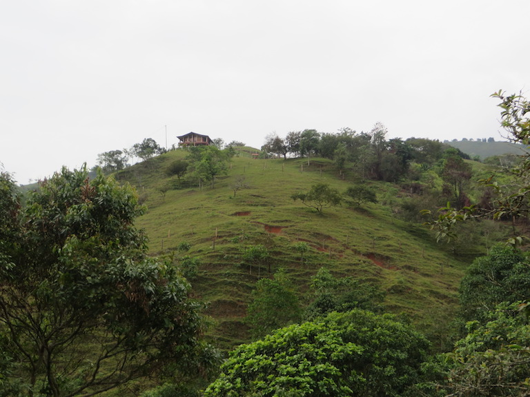 A farm in the Cauca Valley, Colombia, where the owner has planted trees as part of a watershed-wide project to improve both downstream water quality and farmers' productivity and livelihoods. Photo by the Natural Capital Project/Leah Bremer.