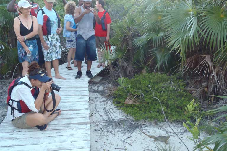 10.Visitors to Little Water Cay Nature Reserve — confined to boardwalks to protect fragile burrows from trampling — get to see Turks & Caicos Rock Iguanas up close. The population on this cay is accustomed to visitors and generally ignores the crowds. Photo by B Naqqi Manco
