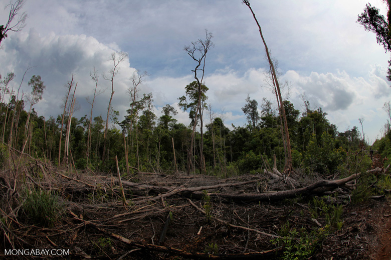 Devastated rainforest landscape in Borneo. Photo by Rhett A. Butler