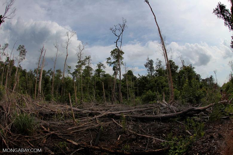 Devastated rainforest landscape in Borneo. Photo by Rhett A. Butler