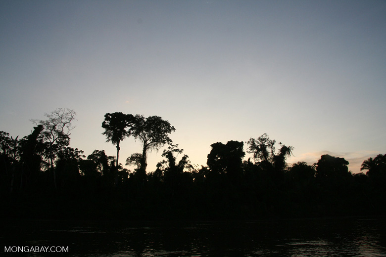 The Amazonian rainforest is benefiting from REDD+, a program that puts oil money to work saving tropical forests and keeping carbon out of the atmosphere. Photo by Rhett Butler