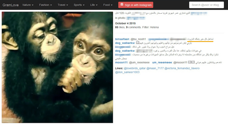 "The Instagram post that tied it all together: an offer of chimpanzees for sale, with interested buyers advised to call Gorge, the nickname of a shadowy Arab Gulf dealer. ""Worthy of all the good,"" Gorge comments next to the video (underlined in orange). Some identities have been blurred out to protect our ongoing investigation. Photo is a screenshot from Instagram."