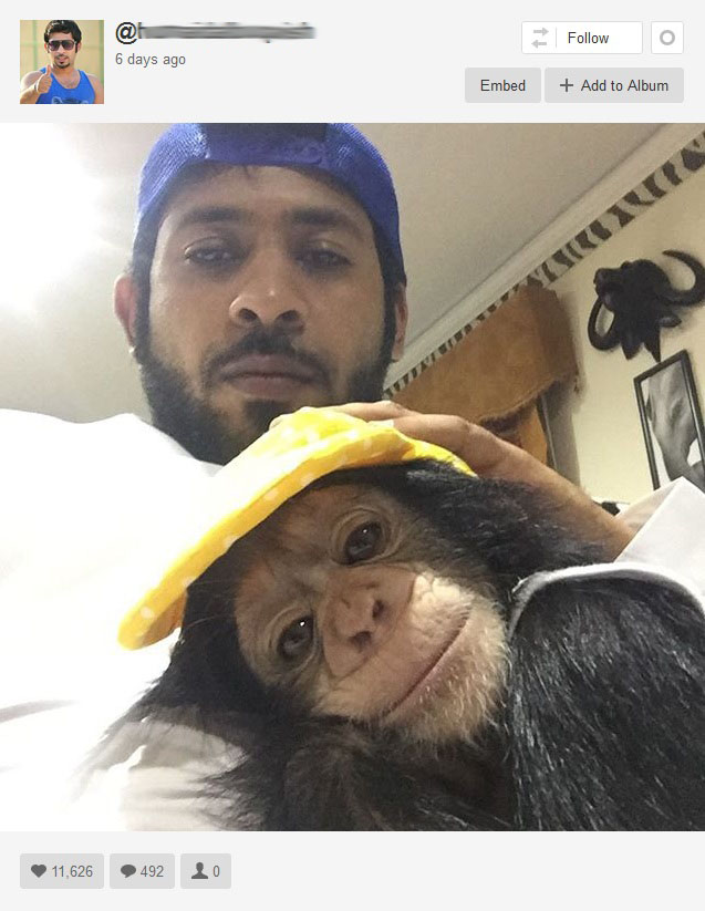 This Dubai animal collector has a lion-filled mansion and a whopping 850,000 Instagram fans. Here he poses with Dubai's most expensive house pet, a young chimpanzee. The account name has been blurred because it appears to be the owner's real name. Photo is a screenshot from Instagram.