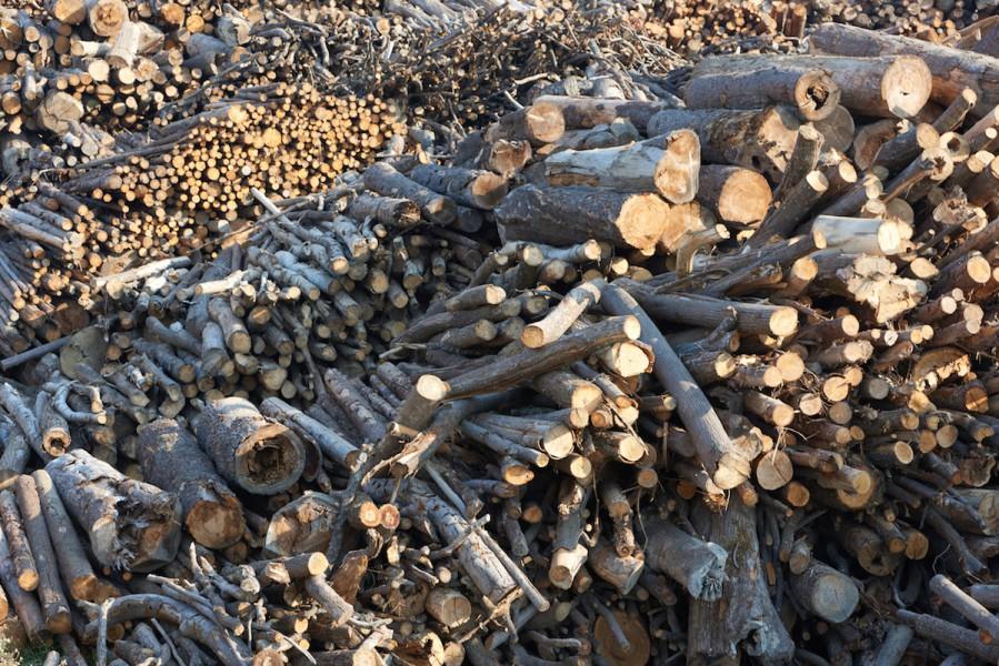 Timber await processing at Kronospan sawmill. Photo by Thomas Einberger/Greenpeace.