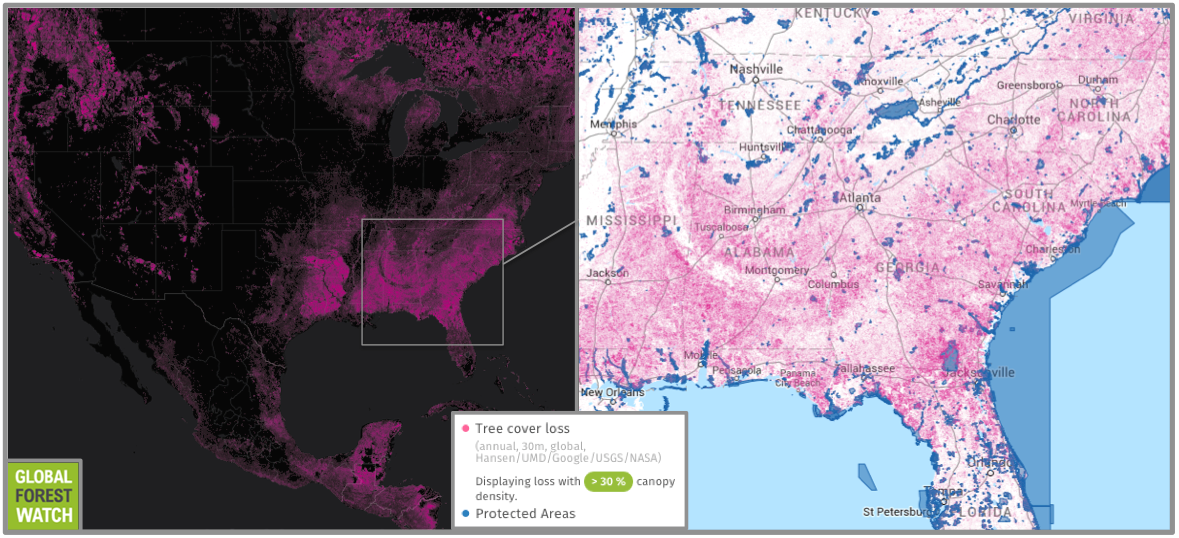 The southeastern U.S. has experienced heavy deforestation. Global Forest Watch shows that the area indicated - where most pellet-wood is sourced - lost around 18 percent of its tree cover from 2001 through 2013. (However, it should be noted that some of this loss may be attributable to tree plantations and does not necessarily represent deforestation).